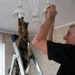 Funny Cat Electrician