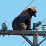 Hello Guys, How are you. Funny electrical, Beer on the top of electrical pole